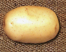 Potato Aposswiftapos Pbr Potato First Early Scottish Basic Seed Potato