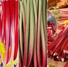 Three colours red rhubarb collection