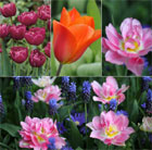 Scented tulip collection