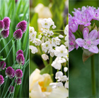 Designer allium bulb collection