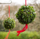 Hedera Living ivy ball