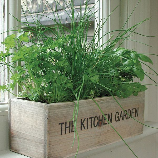 Kitchen Garden Kit: Buy Gift Set Herb Kitchen Garden Kit: Delivery By Waitrose