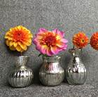 Aztec dahlia collection