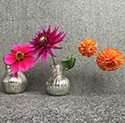 Persian carpet dahlia collection