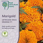 Tagetes erecta Inca Orange (Inca Series)