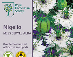 Image of Nigella damascena 'Miss Jekyll Alba' (love-in-a-mist 'Miss Jekyll Alba')