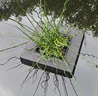 Floating island for 1 litre shallow water plants