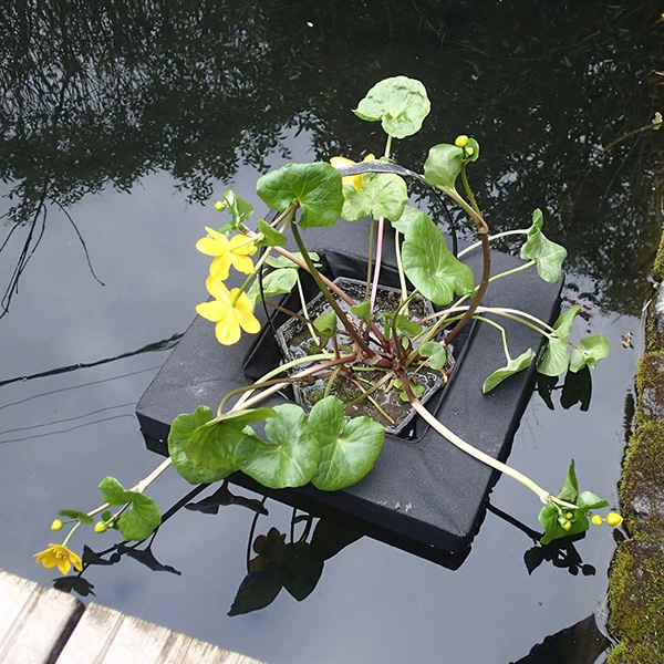 Buy floating island for 3 litre shallow water plants for Floating pond plants