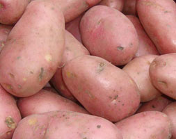 Click to view product details and reviews for Potato Apossarpo Miraapos Pbr Potato Maincrop Scottish Basic Seed Potato.
