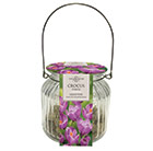 glass gift jar and crocus