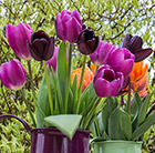 Glowing tulip collection