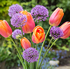 Fresh tulip & allium collection