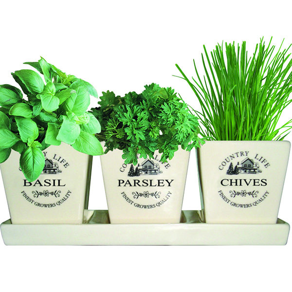 Buy gift set ceramic windowsill herb 39 gift set 39 delivery Kitchen windowsill herb pots
