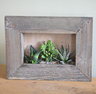 Succulents in picture frame
