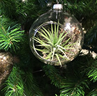 Air plant Christmas tree bauble
