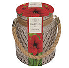 amaryllis 'Red Lion'and glass gift jar