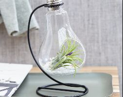 Click to view product details and reviews for Air Plant In A Light Bulb Air Plant Light Bulb Style Vase.
