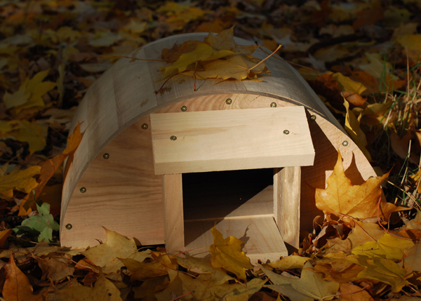 Buy Hedgehog House Delivery By Crocus