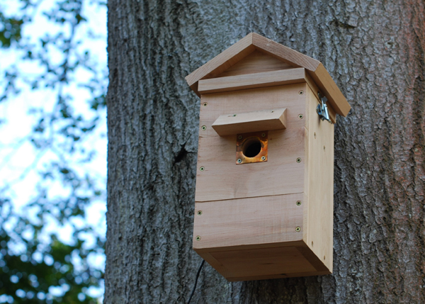Colour camera nesting box