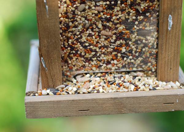Blue tit food seed and insect blend
