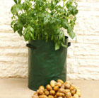 Potato planter bags - 3 Pack
