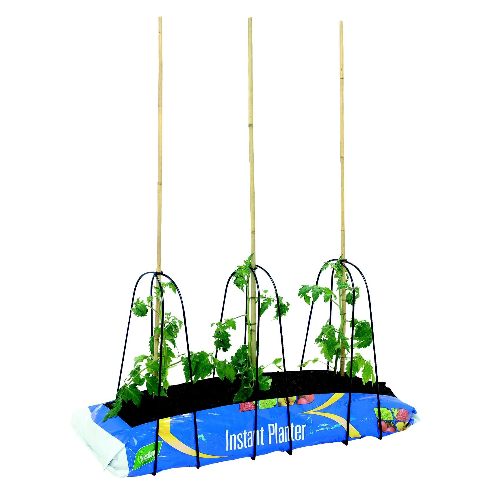 Buy Grow-bag cane frame set: Delivery by Crocus