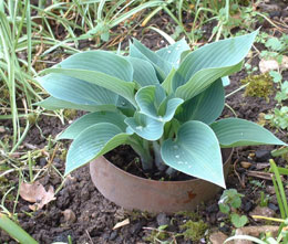 The original copper slug rings - 6 pack