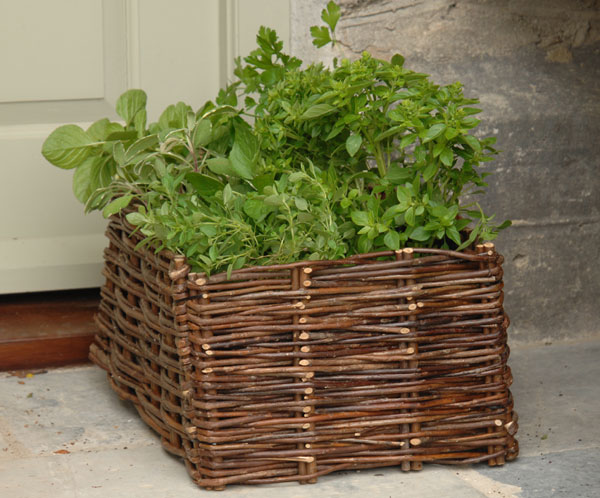 Herb planting bag with natural willow surround