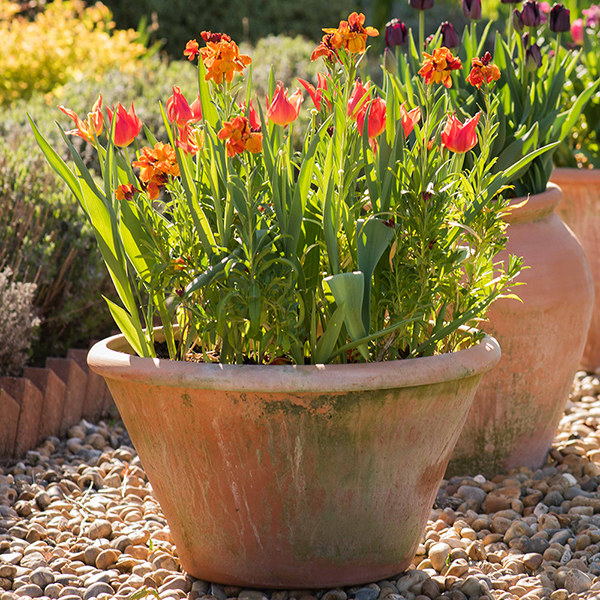 Buy Lucca Terracotta Pot Delivery By Waitrose Garden In Association With Crocus