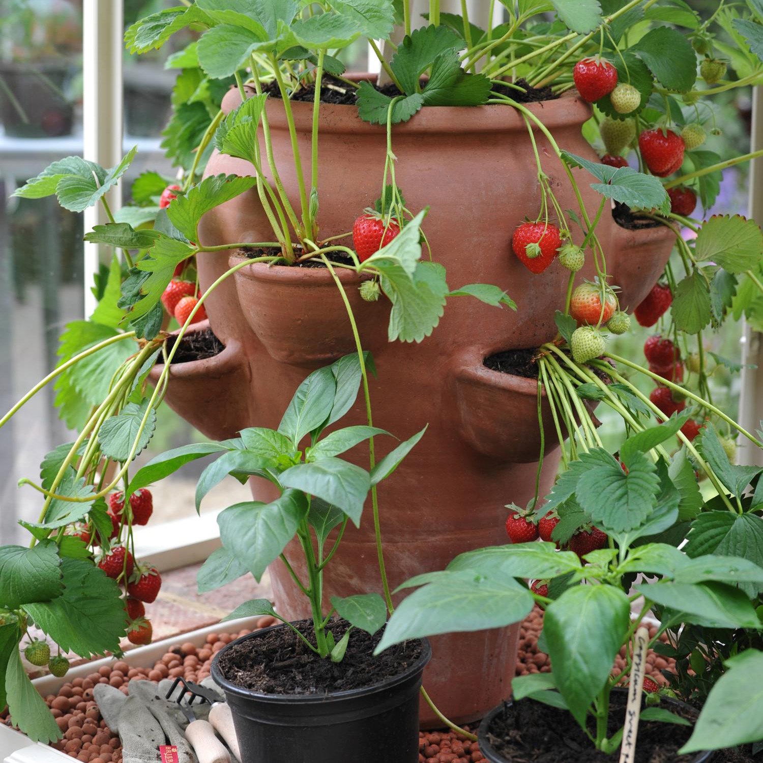 Buy Terracotta Strawberry Planter