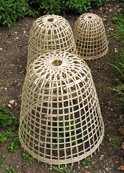 Buy Bamboo cloche Delivery by Waitrose Garden in association with