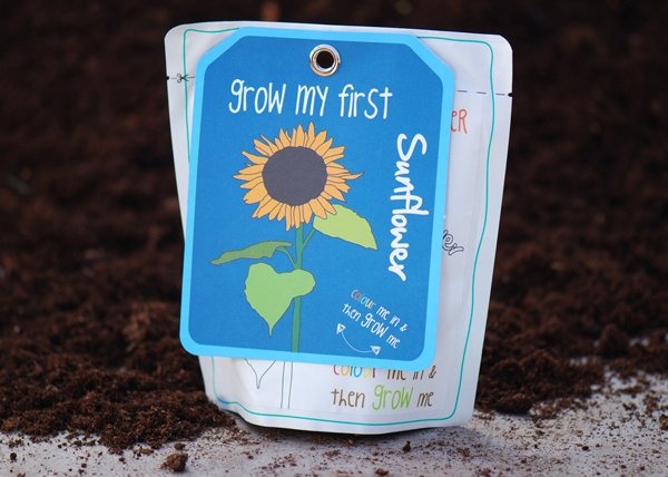 Sunflower - children's grow pack