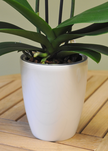 Brussels diamond orchid high pot cover