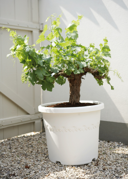 Patio plastic pot