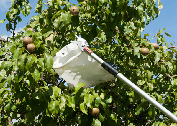 Professional telescopic fruit picker