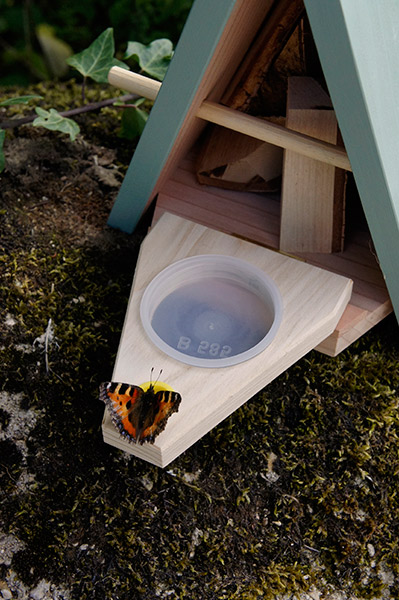 Butterfly feeder and biome