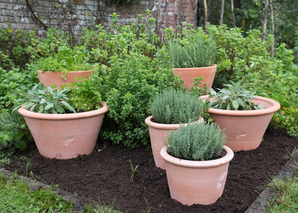 Terracotta kitchen garden grow pot