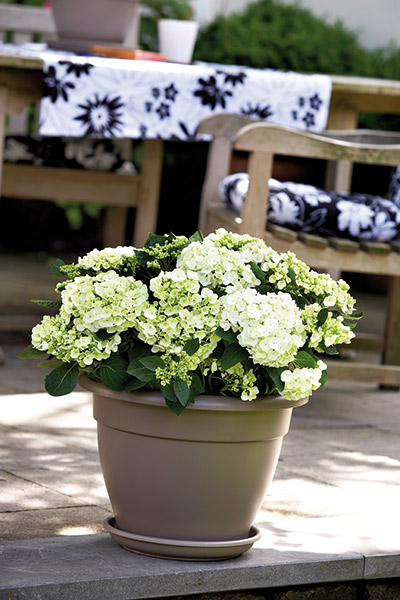 Classic patio pot, 30cm