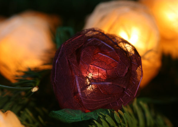 String Lights Next : Buy Burgundy and cream rose string lights