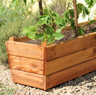 Golden larch deep planter