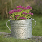 Galvanised planter with handles