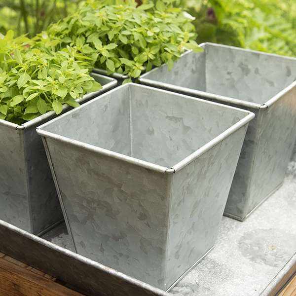 Square herb pot
