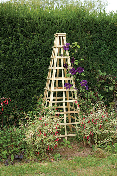 Buy garden obelisk delivery by crocus for Garden obelisk