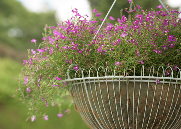 Wide hanging basket