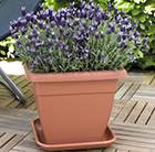 Square patio pot