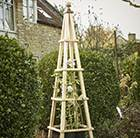 Hardwood obelisk - natural