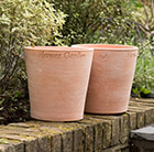 Waitrose garden embossed terracotta pot
