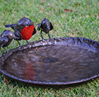 Metal red robins bird bath