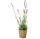 Artificial lavender potted