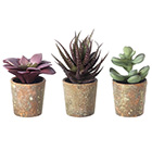 Artificial succulents potted